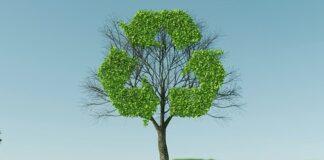 Drzewo ekologiczne.